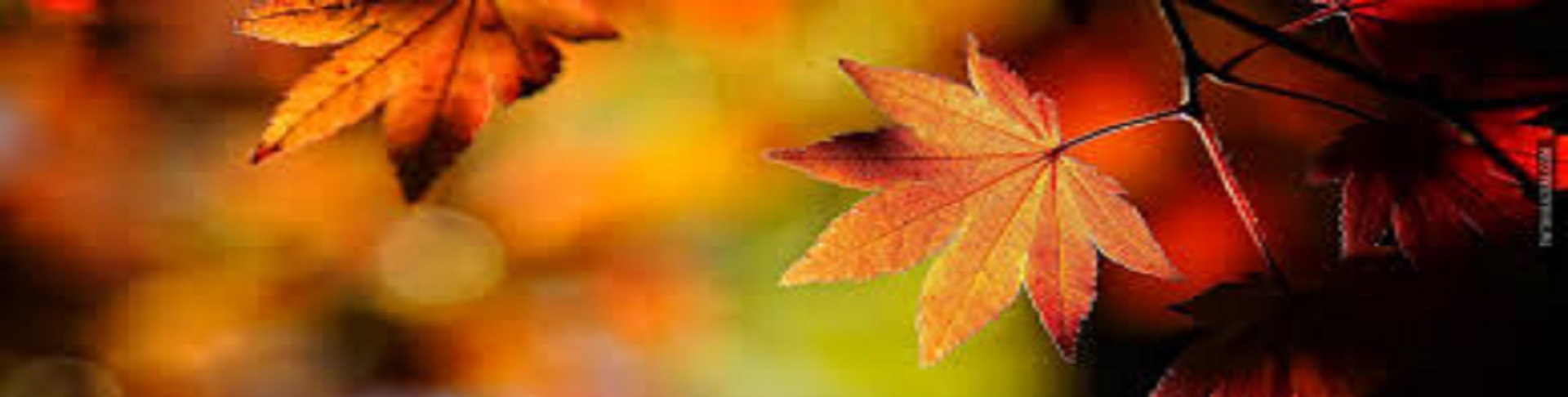 fall leaves slideshow